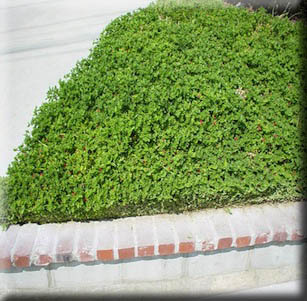 Fire-wise Ground Covers